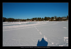 Snowfie (Supersyl08) Tags: winter shadow lake snow silhouette hiver january trails lac skaters ombre neige janvier laurentians skatingrink laurentides selfie patinoire chanteclerc patineurs 2016 sentiers paysdenhaut lacrond steadèle lacsteadèle