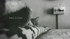 hide and seek II. (ambcroft) Tags: blackandwhite bw cats animals samsung hideandseek gatti animali biancoenero nascondino