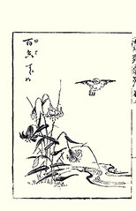 Tiger lily and Eurasian tree sparrow (Japanese Flower and Bird Art) Tags: flower tree bird art japan japanese book lily tiger picture sparrow eurasian lilium kano toun woodblock passer nishimura liliaceae lancifolium montanus passeridae shigenaga readercollection