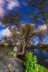 El fresno sonambulista (noctuafoto) Tags: longexposure tree water night clouds reflections stars noche agua tokina nubes estrellas rbol nocturna angular reflejos largaexposicin