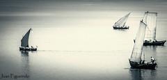 Atrpame si puedes. (Juan Figueirido) Tags: blackandwhite blancoynegro spain barco sailing galicia vela freixo outes radenoia fz150 serradeoutes embarcacionestradicionales rasgallegas rademuros panasonicfz150 juanfigueirido