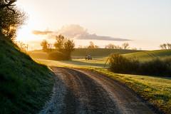 3U4A0285_MartenSvensson (Bad-Duck) Tags: traktor vr morgon amazone motljus newholland maskiner spr jordbruk spruta rstid hstvete omstndigheter