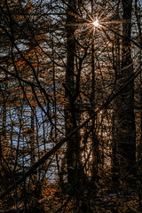 sunbeams in the woods (Vanili11) Tags: road park morning light shadow orange brown mist lake inspiration plant canada green fall scale nature colors beautiful beauty leaves silhouette misty fog mystery pine composition forest dark season landscape outdoors dawn leaf moss spring bush scenery colorful europe day branch shine bright outdoor dusk background space low radiance creative foggy scenic poland fresh falling foliage growth fairy evergreen pines fantasy environment outback rays lush majestic footpath idyllic beams beech scenics coniferous kashubia