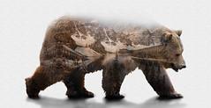 BEAR (XAEVO DELUXE) Tags: bear park travel sky mountain lake jason canada water monochrome rock rocks exposure doubleexposure deluxe ngc double fave national banff fav crux jasoncrux xaevo xaevodeluxe