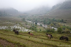 Nam Cang Village (Vinchel) Tags: leica travel mountain field landscape outdoor sony hill north vietnam cai mountainside q grassland lao province cang sapa nam