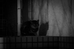 Today's Cat@2016-01-15 (masatsu) Tags: bw cat pentax cc100 catspotting mx1 thebiggestgroupwithonlycats