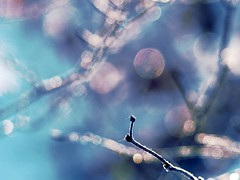The branch's view (broombesoom) Tags: nature germany deutschland focus branch bokeh outdoor pastel natur schrfentiefe pastell zweig pastellfarben drausen