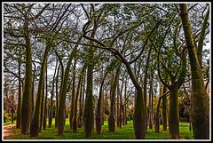 Bosques ciudadanos (edomingo) Tags: valencia arboles nikond90 edomingo nikkor1685vr