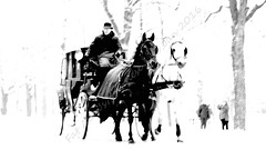 Ghost Carriage (mollymemesi) Tags: vienna wien trees winter horses horse snow cold tree monochrome cheval carriage avenue pferd prater vienne chevaux horseandcarriage avenueoftrees horseandtrap fatalan