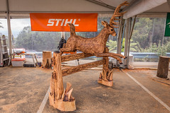 Chainsaw competition at Sky High, Mount Dandenong (Paddock Without A Fence) Tags: wood chainsaw australia victoria carving mtdandenong stihl