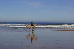 caballos (Kilmar2010) Tags: horses beach strand caballos see mar asturias playa seashore seam pferden principadodeasturias laorilla dasufer