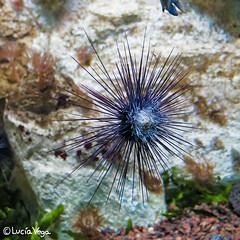 Acuario II (Luca Vega) Tags: madrid pez animal zoo zoolgico acuario