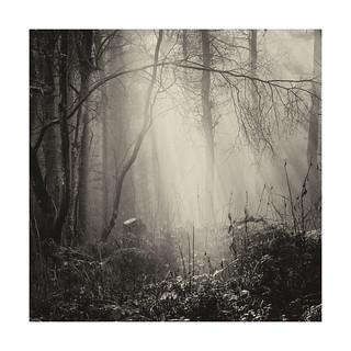 darkwoods9
