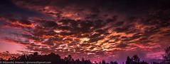 Y cmo quedarse dormido y perderme esto!. (www.GoAndRide.co) Tags: sky sun sol maana clouds sunrise amanecer cielo nubes rays palmas rayos