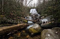 Cove Creek Falls (csnyder103) Tags: winter rescue dog waterfall northcarolina pisgah pittie covecreekfalls canoneos6d tokina1628f28 fotodioxwonderpana