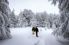 in the Cedar Forest. (jrseikaly) Tags: trees winter portrait people lebanon snow forest jack photography high dynamic cedar range arz hdr cedars seikaly jrseikaly
