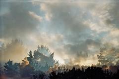 (AirSonka) Tags: trees winter sky sunlight film silhouette clouds analog 35mm lomo toycamera multipleexposure multiple analogue smena smena8m multiplied pelcula filmphotography pellicule kodakgold200 airsonka mehrfachbelichtung soniakaniss