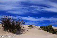 sand ,shrubs an sky (Malcom Lang) Tags: summer sky club clouds canon out outside outdoors sand shadows view outdoor dunes south clear southern rush heat lincoln vista southaustralia shrubs wreckbeach ridges lincolnnationalpark knobby southernaustralia canonef wattles canonef2470mm canon6d canoneos6d sleafordbay lincolnnationalparksouthaustralia malcomlang malcomlangphotos