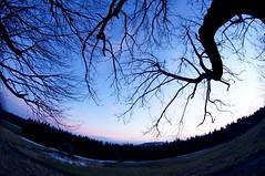Inception (maria_maeusels) Tags: blue schnee trees winter sunset sky sun mountain distortion snow berg forest landscape high hessen branches himmel 8 fisheye mm blau äste landschaft sonne wald fulda baum wasserkuppe weitwinkel hoch objektiv verzerrung
