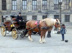 Paardenkoets001 (Quetzalcoatl002) Tags: horse amsterdam coach dam horsedrawn damsquare paardenkoets koetsjes