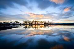 Eucalyptus Headrush (ajecaldwell11) Tags: longexposure trees light sunset newzealand sky water clouds dusk eucalyptus napier hawkesbay watchman ahuriri