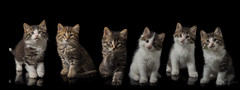 Kittens (Rainfire Photography) Tags: cats ontario canada cute composite cat kitten kittens panoramic rainfirephotography
