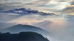 大崙山 ~雲朵~  Spotlight clouds (Shang-fu Dai) Tags: sunset sea sky clouds landscape nikon taiwan 南投 formosa 台灣 雲 山 日落 風景 天空 d800 雲海 原野 戶外 銀杏森林 夕彩 afs24120mmf4 武岫 大崙山觀光茶園