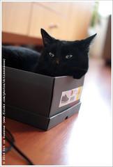 Het past | It fits (Dit is Suzanne) Tags: cat blackcat kat boris kater   borya zwartekat sigma30mmf14exdchsm img7297 canoneos40d  03012015 ditissuzanne kotborya