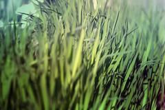 blur-dreamy-texture-texturepalace-3 (texturepalace) Tags: blur color leaves cc creativecommons dreamtextures texturepalace blurtextures
