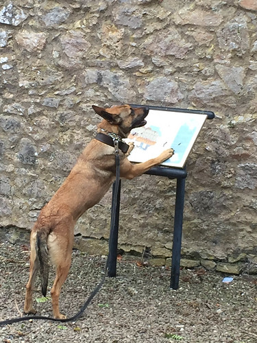 They were training guard dogs at Bridgetown Priory