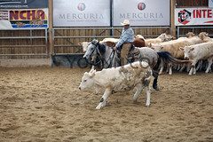 BJ1A3999 (yoann coin) Tags: en horse france western cutting bons equitation ccha chablais ncha charmot