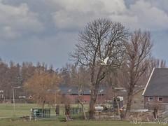 Witte reiger (LadyLove1967) Tags: vogels wolken denhaag zon landschap hagel stompwijk