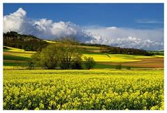 20160424-171206 (lichtschattenjaeger) Tags: yellow landscape gold diesel bio eifel gelb raps biodiesel vulkan getreide gerste weizen benzin hafer biosprit
