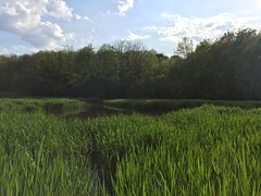 Go green or go home! (Mikowski Gabe) Tags: sun lake nature clouds woods fluffy delta swamp vegetation almost shining lucious