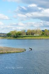 Juegos... (Santiago Snchez Lpez) Tags: amigos agua juegos jardin paseo nadar embarcadero perros laguna