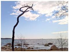 View to south from Lauttasaari, Helsinki, Finland, April 2016 (Juha Riissanen) Tags: sea sky cloud tree finland island spring helsinki baltic shore lauttasaari gulfoffinland melkki