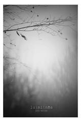 """depressions"" (Lumins) Tags: light mist cold tree fog smog wooden sony rainy harmony dreams alpha melancholic"