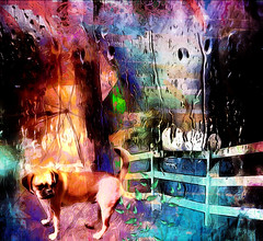 Gimme Shelter (abstractartangel77) Tags: rain umbrella fence teddy gimmeshelter