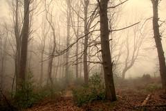 Misty morning in the forest (impossiblejoker) Tags: wood mist tree nature misty fog forest nikon nebel natur wald morgennebel d7100