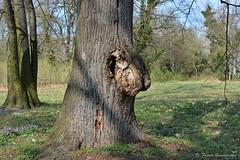 Cecilienhof 005 (Frank Guschmann) Tags: nikon bäume potsdam neuergarten baumgesicht d7100 frankguschmann nikond7100
