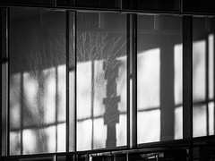 Natural Encroachment (Doug Knisely) Tags: street windows reflection building tree urn architecture washingtondc entrance olympus lobby contrasts 40150r omdem5markii