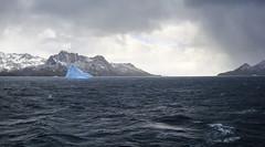 DSC03304 (peng_tim1) Tags: antarctica antarctic eisberg iceger anartikis