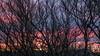 Reykjavik sunset | Iceland (Julien Ratel ( Júllí Jónsson )) Tags: trees sunset home canon landscape iceland spring colorful reykjavik paysage wandering heima islande icelandic landslag efs1022 neverstopexploring islenska blueju38 julienratel lýðveldiðísland julienratelphotography landslagsmynd blueju islenski inspiredbyiceland earthpix eos7dmarkii welivetoexplore jullijonsson icelandexploring