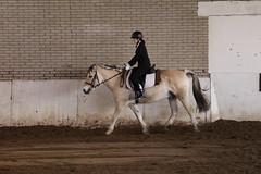 IMG_6428 (Marc van der Molen) Tags: manege paarden noordwijkerhout 2016 dressuur langeveld