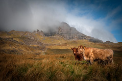The old man of Storr and friends (cheese and pickle) Tags: sky orange mountain storm mountains color colour green nature grass clouds landscape scotland nikon cows isleofskye natural stones atmosphere livestock scottishhighlands
