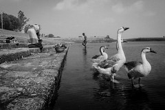 Bera Port,Pabna 2016 (Extinted DiPu) Tags: life summer water canon river canal blackwhite duck triangle fotografie outdoor sunny scout fibonacci equation duckroast natgeo inexplore 121click irepresentbangladesh lifestyleofbangladesghipeople