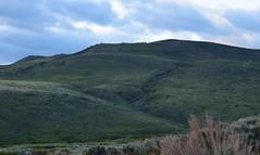 DSC_0228_962 (Derek Shore) Tags: sky mountain tree nature beautiful wow outside cool nikon nikond3300 d3300