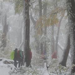 Otoo Invierno (Mono Andes) Tags: chile andes otoo villarrica lengas parquenacional chilecentral regindelaaraucana nothofaguspumilio