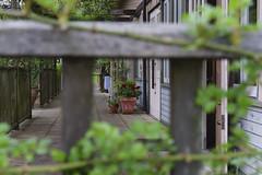 _DSC2058 (Osamu1965) Tags: flower japan zeiss garden spring sony contax jp   okayama     a7m2  carlzeissvariosonnart2870mmf3545mm