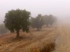 Boira 2 - Jaume Sacasas